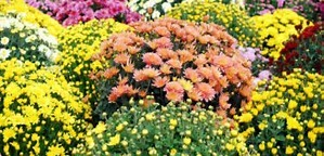 fleurs toussaint